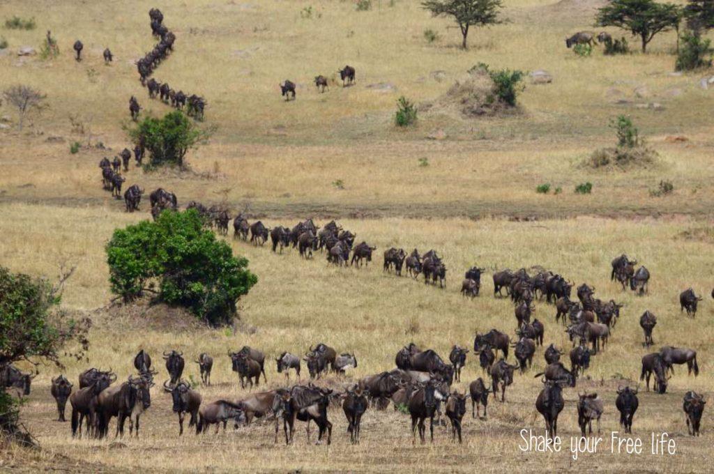 Tanzania-avventure-nel-mondo