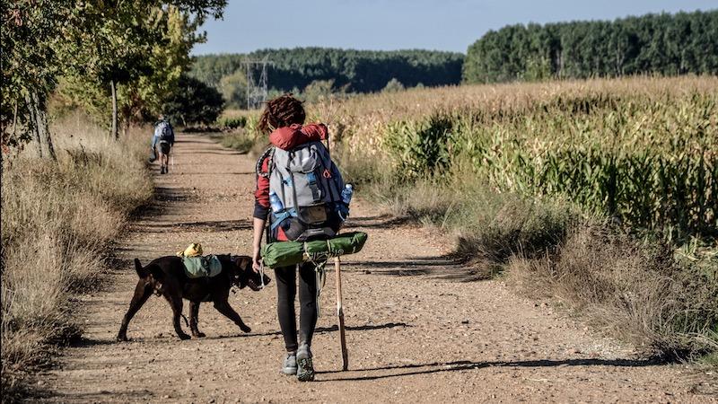 con il cane sulla via di Francesco
